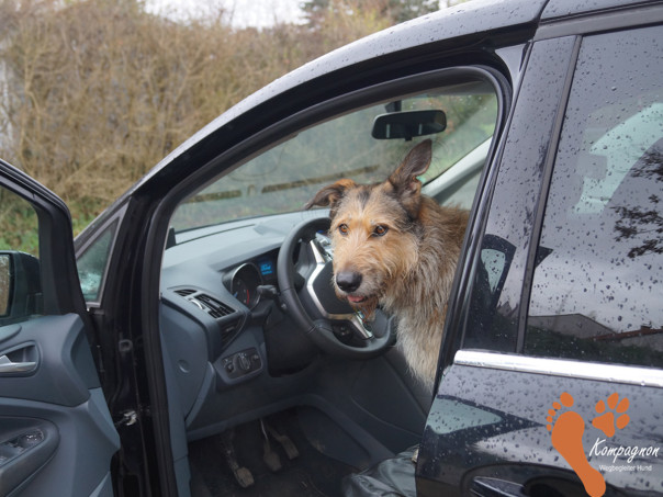 kompagnon-hundefuehrerschein